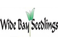 wide bay seedlings